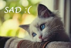Sad cat is sad.